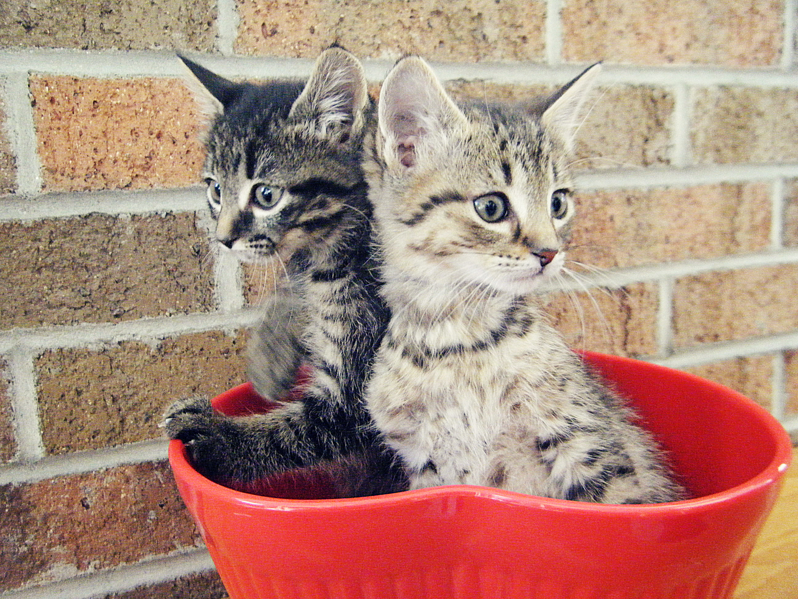 cats in bowl